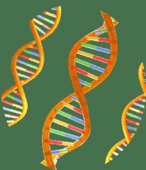 Atelier Numérique - ADN